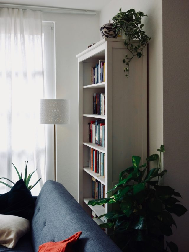 Letting nature inside: A room full of plants